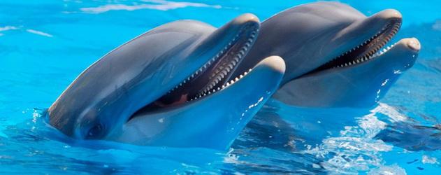 Цікаво про життя дельфінів