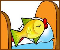 Чи вміють спати риби