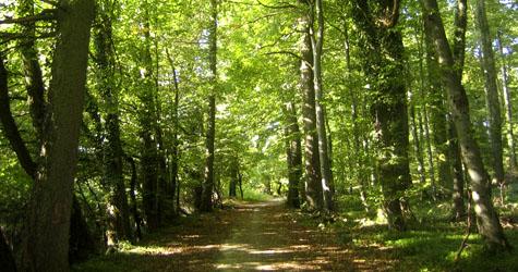 Міжнародний день ліс. Святкуємо в березні